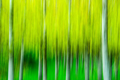 Photograph - Poplars by Michele Wright