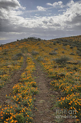 Photograph - Poppies At Peridot Mesa by Tamara Becker