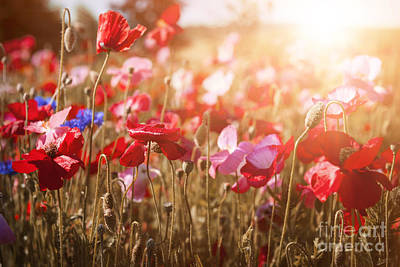 Sunflare Photograph - Poppies In Sunshine by Elena Elisseeva