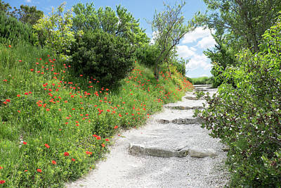 Provence Photograph - Poppies On The Grounds Of Les Baux by Emily Wilson