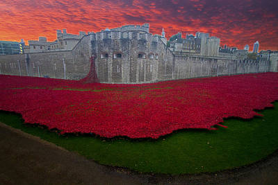 Photograph - Poppies Tower Of London by David French