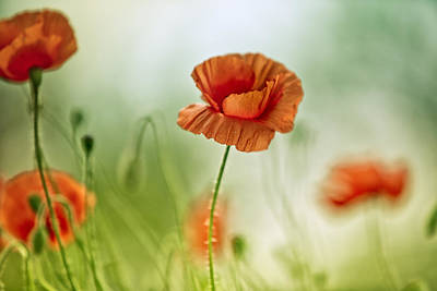 Royalty-Free and Rights-Managed Images - Poppy Meadow by Nailia Schwarz