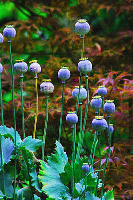 Poppy Seed Pods Art Print by Tom Janca