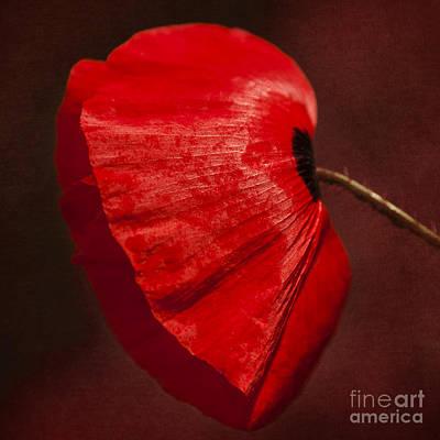 Sensual Digital Art - Poppy by Svetlana Sewell