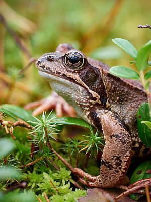 Portrait Of A Frog Art Print by Jouko Lehto