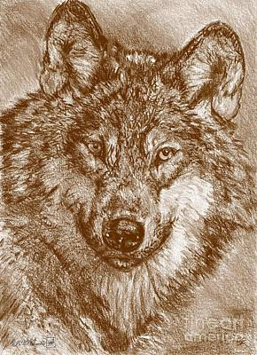 Drawing - Portrait Of A Gray Wolf by J McCombie