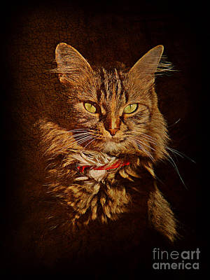 Portrait Of A Tramp Cat Art Print