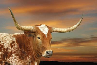 Texas Longhorn Cow Photograph - Portrait Of Porter by Robert Anschutz