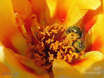 Painting - Portulaca In Orange Fading To Yellow by J McCombie
