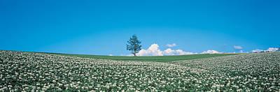 Potato Field Biei-cho Hokkaido Japan Art Print by Panoramic Images