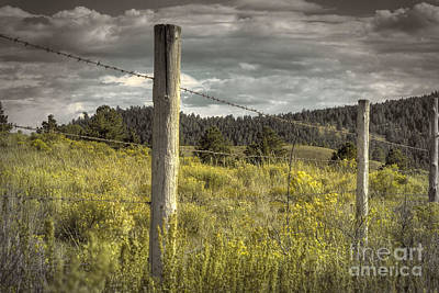 Photograph - Prairie Fence by David Cutts