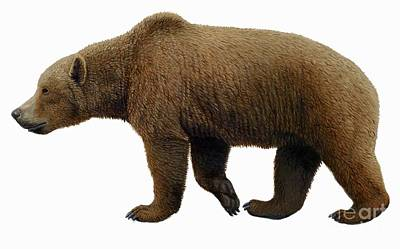 Cave Bear Photograph - Prehistoric Cave Bear, Artwork by Mauricio Anton