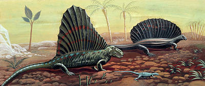 Paleozoology Photograph - Prehistoric Reptiles by Deagostini/uig