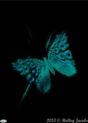 Digital Art - Pretty In Black Teal by Holley Jacobs