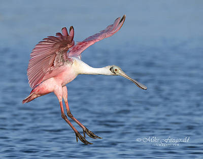Photograph - Pretty In Pink by Mike Fitzgerald