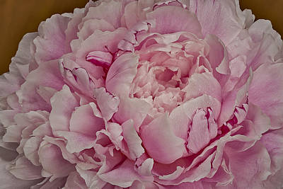 Pretty In Pink Print by Susan Candelario
