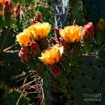 Photograph - Pretty Prickly by Patrick Witz