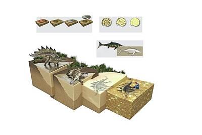 Process Of Fossilization Art Print