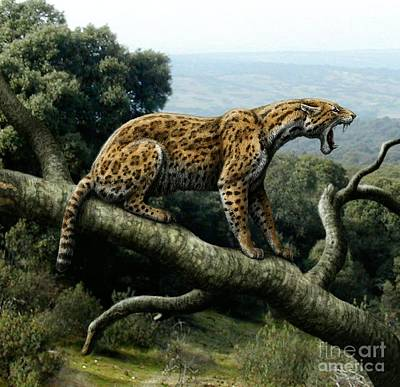 Photograph - Promegantereon Sabretooth Cat by Mauricio Anton