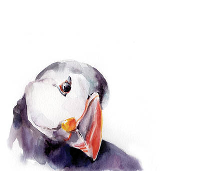 Puffin Painting - Puffin by Sophia Rodionov