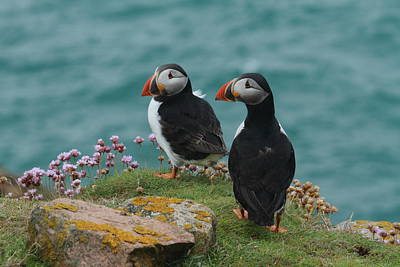 Photograph - Puffins by Peter Skelton