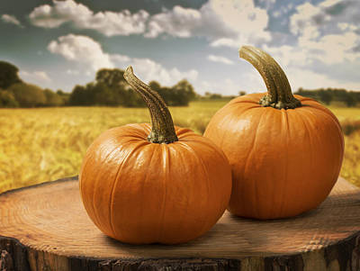 Photograph - Pumpkins by Amanda Elwell