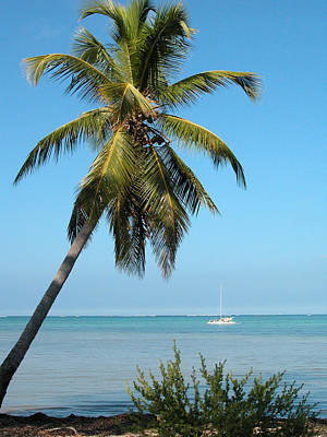Photograph - Palm Tree And A Yacht In Punta Cana by Rob Huntley