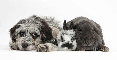 House Pet Photograph - Puppy And Rabbits by Mark Taylor