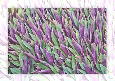 Print featuring the photograph Purple And Green by Holly Kempe