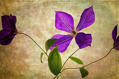 Photograph - Purple Flower by Al  Mueller