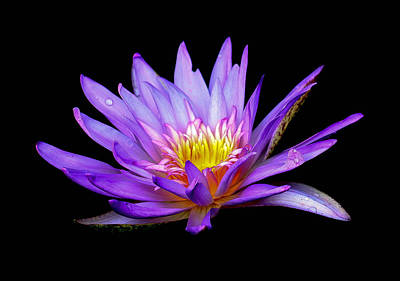 Photograph - Purple Lilly by Sean Allen