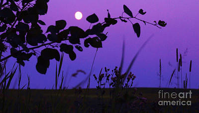 Photograph - Purple Moon by Marianne NANA Betts
