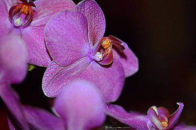Photograph - Purple Orchid by Diana Mary Sharpton