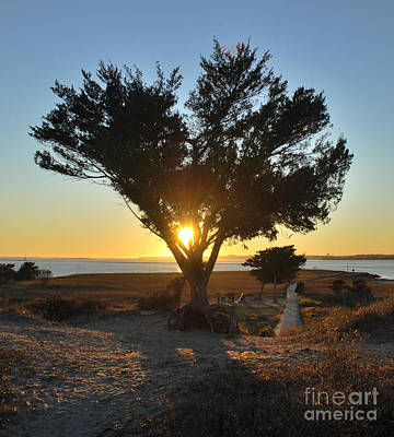 Photograph - Sun Burst Through The Cypress by Bob Sample