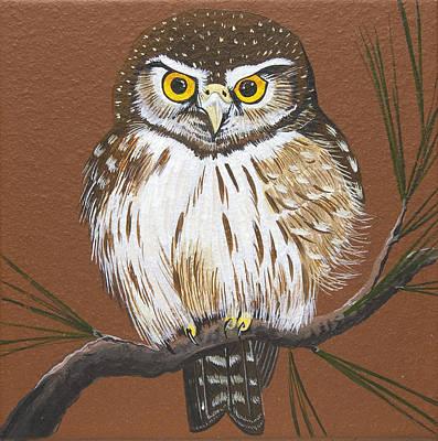 Painting - Pygmy Owl by Jennifer Lake