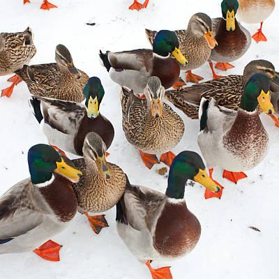 Photograph - Quack Quack by Bonnie Bruno