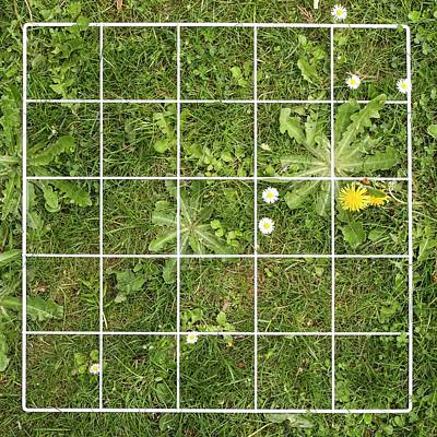 Quadrat On A Lawn With Weeds Art Print by Science Photo Library