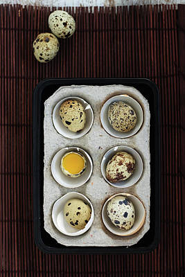 Break Of Day Photograph - Quail Eggs by Ashasathees Photography
