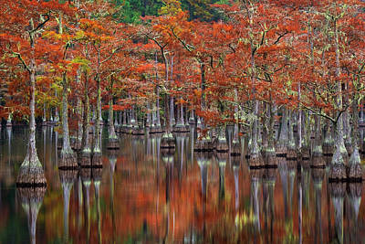 Swamp Photograph - Quiet Cove by Chris Moore