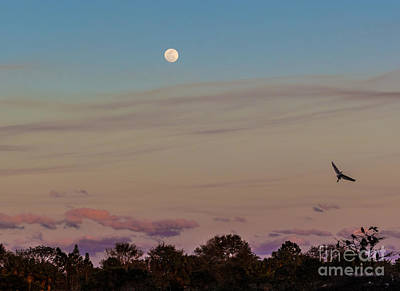 Photograph - Quiet Evening by Michelle Constantine