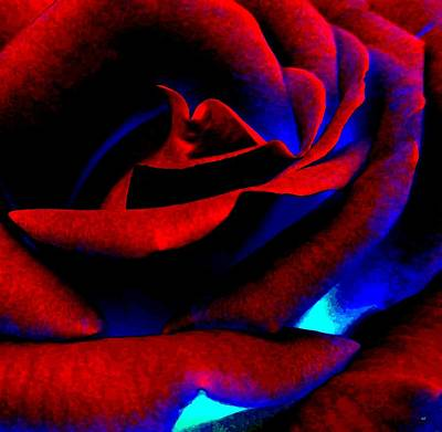 Digital Art - Radiant Red Rose by Will Borden