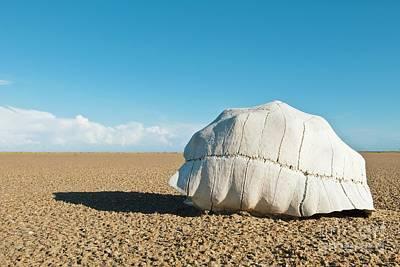 Radiated Tortoise Shell In A Desert Art Print by Alexis Rosenfeld