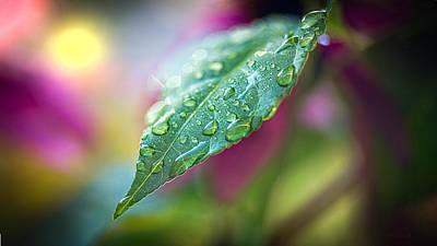 Photograph - Raindrops by Bob Orsillo