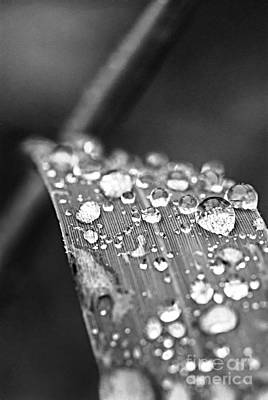 Raindrops On Grass Blade Art Print
