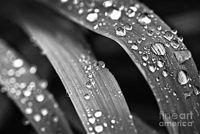 Grass Photograph - Raindrops On Grass Blades by Elena Elisseeva