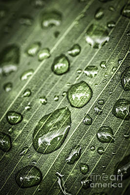 Natural Abstract Photograph - Raindrops On Green Leaf by Elena Elisseeva