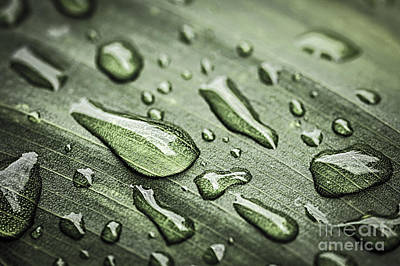Natural Abstract Photograph - Raindrops On Leaf by Elena Elisseeva
