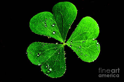 Sour Photograph - Raindrops On Shamrock by Thomas R Fletcher