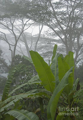 Photograph - Rainforest In Timor-leste by Dan Suzio