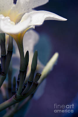 Photograph - Raining Petals by Sharon Mau